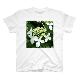 天城甘茶 T-shirts