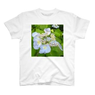 八重咲きアマチャ T-shirts