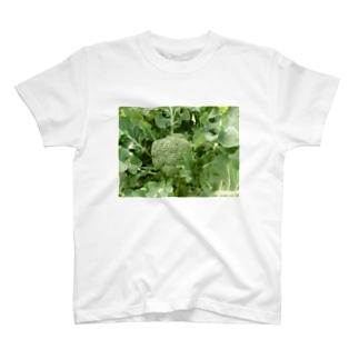 日本の野菜:ブロッコリー Broccoli T-shirts