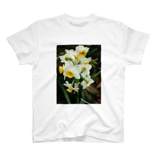 水仙 スイセン DATA_P_100 春 spring T-shirts