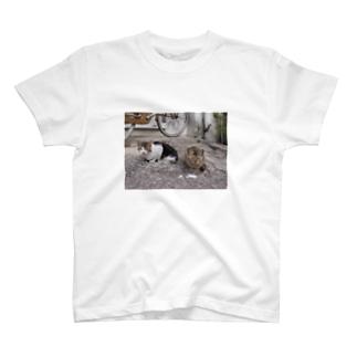 島猫not遠近法 T-shirts