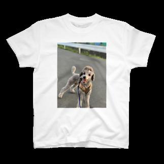 swans8818の犬 T-shirts
