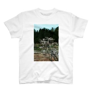 梅 ウメ Japanese apricot DATA_P_102 春 spring T-shirts