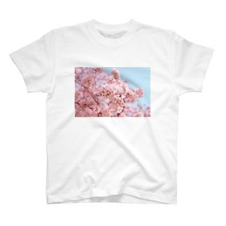 【対コロナ】桜Tシャツ / T-shirts