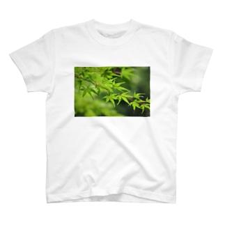 新緑もみじ T-shirts