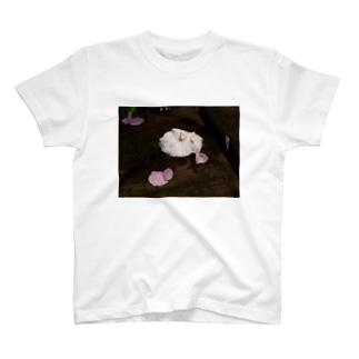 桜 サクラ cherry blossom DATA_P_112 春 spring T-shirts