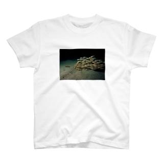 ゴンズイ T-shirts