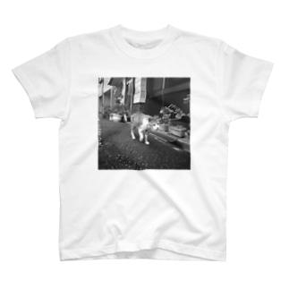 ねこ師匠(モノクロ) T-shirts