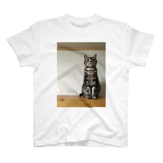 ぴんと真っ直ぐはっさくシリーズ T-shirts