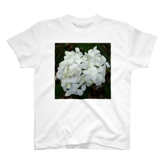 白マイコアジサイ T-shirts
