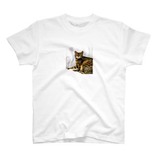 ゆかちゃん's ネコ T-shirts