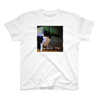 にぃちゃんグッズ T-shirts
