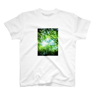 GREEN/green T-shirts