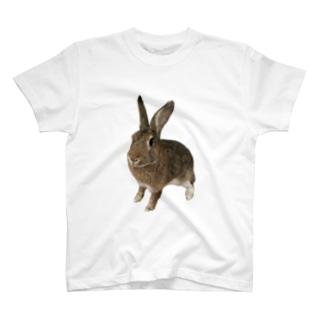 チェスナッツうさぎB T-shirts