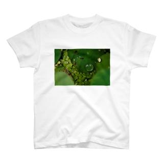 蓮・水滴 T-shirts