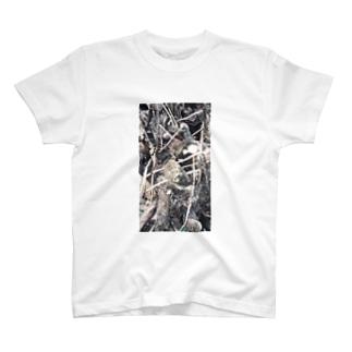 イエネコの植物 木 T-shirts