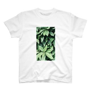 イエネコの植物 ツツジ T-shirts