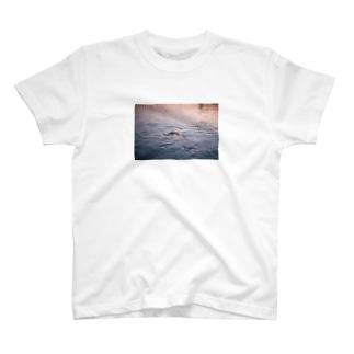 koi T-shirts