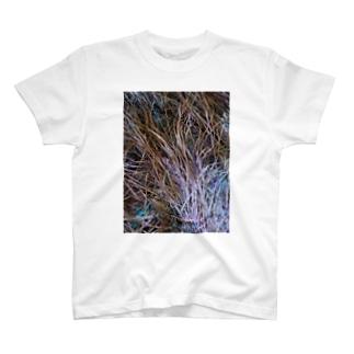 写真家・宮坂泰徳の『Means for loving the world』Tシャツ4 T-shirts