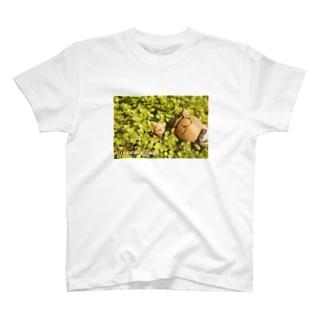 多肉植物とウゲロくま T-shirts