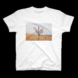 302のtree T-shirts