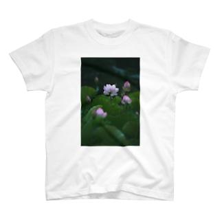 Photo : 蓮 T-shirts