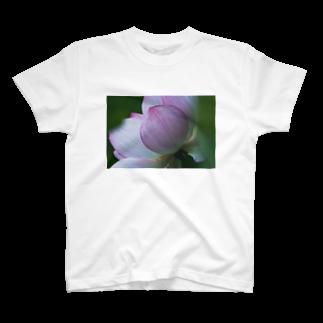 写真プリントのPhoto : 蓮の花 T-shirts