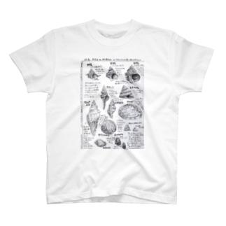 貝殻図鑑 T-shirts