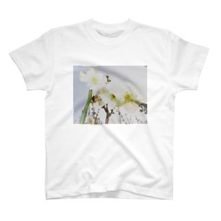 TOKIMEKIFLOWER白梅花 T-shirts