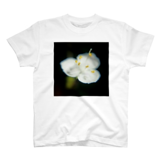 ブライダルベールA T-shirts