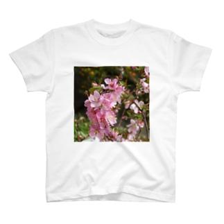 日本の花:ユスラウメ? Nanking cherry flowers (?) T-shirts