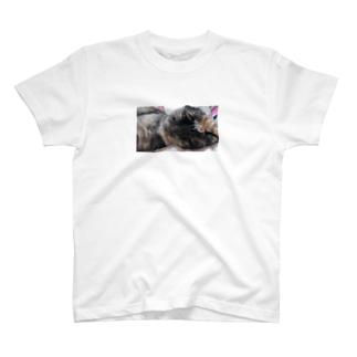 あかめ@猫カフェのとろけるサビ T-shirts