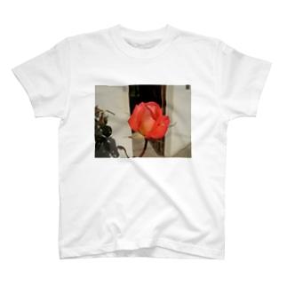 Rose de bretagne ブルターニュの薔薇 T-shirts