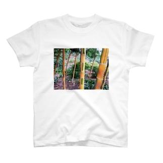 Bamboo 竹 T-shirts