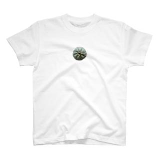 ユーフォルビア・オベサ T-shirts