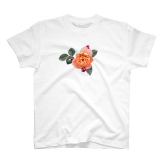 蕾と葉のついたオレンジピンクの薔薇 T-shirts