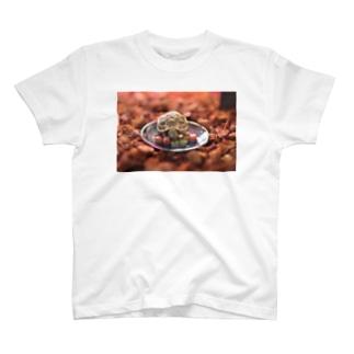 妹のカメ T-shirts