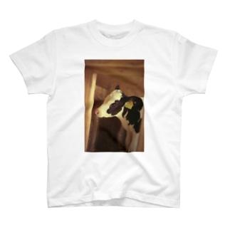 馬喰の仔牛 T-shirts