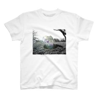 (公財)ハーモニィセンター チャリティグッズ セナ T-shirts