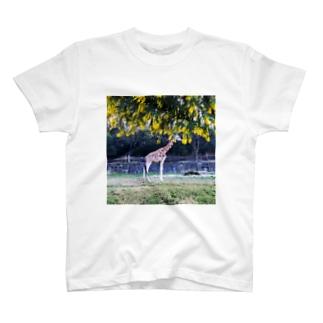 Chisakoのキリンとアカシアしかく T-shirts