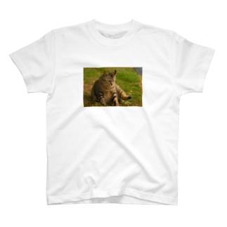 脚上げ猫さん T-shirts