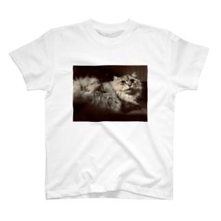 黄昏ニャンコ T-shirts