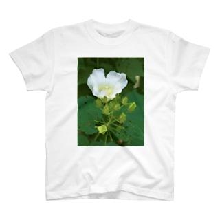 芙蓉 DATA_P_132 Confederate Rose ハスの花の古名 T-shirts
