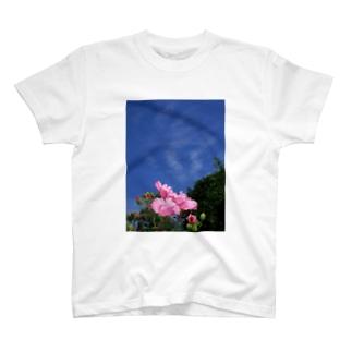 芙蓉 DATA_P_133 Confederate Rose ハスの花の古名 T-shirts