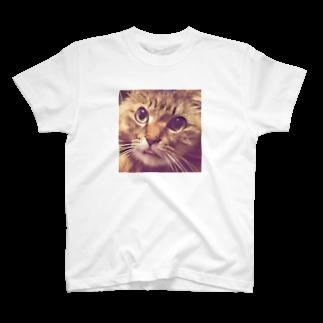 とらお/虎緒のまむさん(舌しまい忘れ) T-shirts