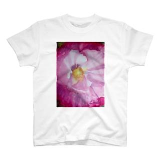 Poppy Focus-3 T-shirts