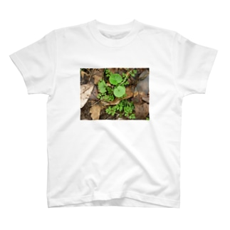 美しい葉たち T-shirts