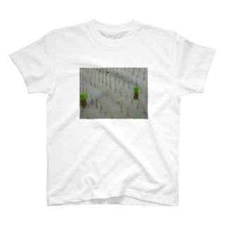 田植え T-shirts