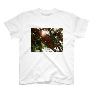 ピラカンサス DATA_P_136 T-shirts