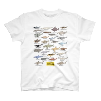 Sharks30(color)1.1 Tシャツ